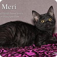 Adopt A Pet :: Meri - Ortonville, MI