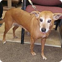 Adopt A Pet :: Nellie - Livingston, TX
