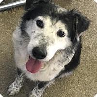 Adopt A Pet :: Kirk - Sparta, NJ