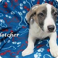 Adopt A Pet :: Fletcher - Bartonsville, PA