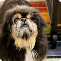Adopt A Pet :: Mr. T - Flagstaff, AZ