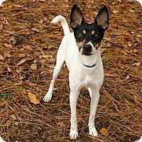 Adopt A Pet :: Slim Jim - Brownsboro, AL