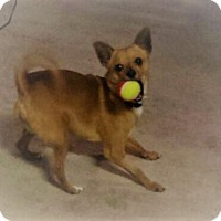 Adopt A Pet :: Nacho - Indianapolis, IN