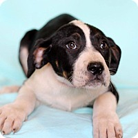 Adopt A Pet :: Lenore - Waldorf, MD