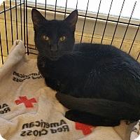 Adopt A Pet :: Zane - Bayonne, NJ