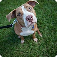 Adopt A Pet :: Gabby - Lake Worth, FL