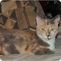 Adopt A Pet :: Molly Mae McButter - Chula Vista, CA