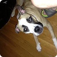 Adopt A Pet :: Beanie nee Chanel - Marietta, GA