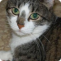 Adopt A Pet :: Gabby - Plainville, MA