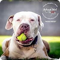 Adopt A Pet :: Hugo - Scottsdale, AZ