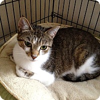 Adopt A Pet :: Miss Kitty - Colmar, PA
