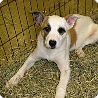 Adopt A Pet :: Alex - Gainesville, FL