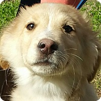 Adopt A Pet :: Ziggy - Spring Valley, NY