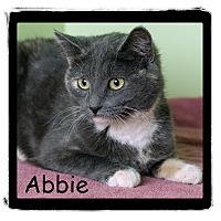 Adopt A Pet :: Abbie - Warren, PA
