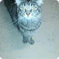 Adopt A Pet :: Cowa - Trevose, PA
