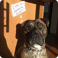 Adopt A Pet :: Benson - Wauwatosa, WI
