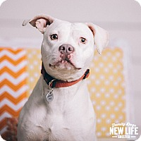 Adopt A Pet :: Lilly - Portland, OR