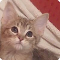 Adopt A Pet :: Archie - Warren, OH