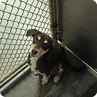 Adopt A Pet :: Riley - Burlington, NJ