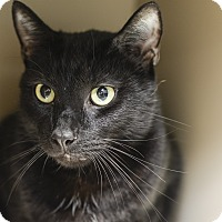 Adopt A Pet :: Shadow - Whitehall, PA
