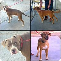 Adopt A Pet :: Jack & Jill - California City, CA