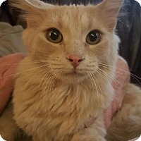 Adopt A Pet :: Griffin - Denver, CO