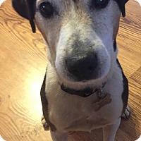 Adopt A Pet :: Karson in Amarillo - Austin, TX