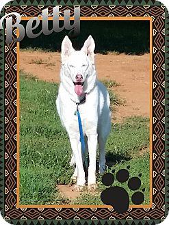 German Shepherd Dog/Husky Mix Dog for adoption in Stuart, Virginia - Betty White