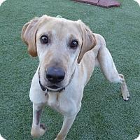 Adopt A Pet :: Charlie #6 - Falls Church, VA