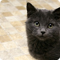Adopt A Pet :: Amy VALENTINE'S SPECIAL! 50% O - Republic, WA