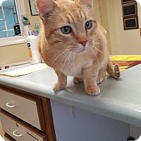 Adopt A Pet :: Porkchop - Cody, WY