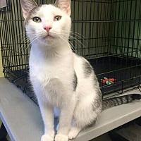 Adopt A Pet :: Loki - Cleveland, OH
