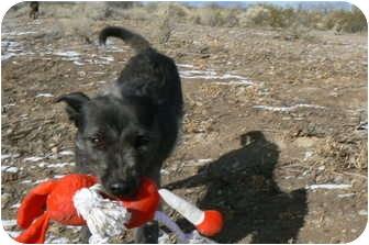 Kerry Blue Terrier/Terrier (Unknown Type, Medium) Mix Dog for adoption in Thatcher, Arizona - Winnie
