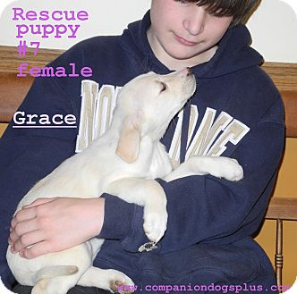 Labrador Retriever Mix Puppy for adoption in Centerpoint, Indiana - Grace