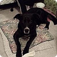 Adopt A Pet :: Jax - Saskatoon, SK