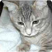 Adopt A Pet :: Noodle - Arlington, VA
