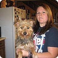 Adopt A Pet :: Sam - Salem, NH