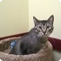 Adopt A Pet :: Taddy - McHenry, IL