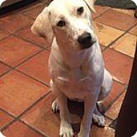 Adopt A Pet :: Pearl - Marlton, NJ
