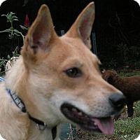 Adopt A Pet :: Paige (fostered in GA) - Cranston, RI