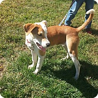 Adopt A Pet :: Pink - Manhasset, NY