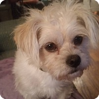 Adopt A Pet :: Toby - Elkhart, IN