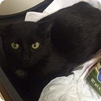 Adopt A Pet :: Slicky Chicky - Morganton, NC