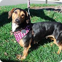 Adopt A Pet :: Hailey - Richmond, VA