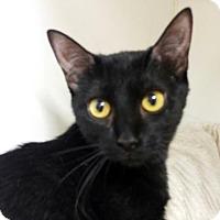 Adopt A Pet :: Double - Austin, TX