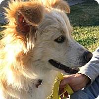 Adopt A Pet :: Zane-ADOPTION PENDING - Boulder, CO