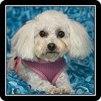Adopt A Pet :: Alisa - San Diego, CA