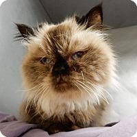 Adopt A Pet :: Porsha - Long Beach, NY