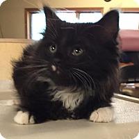 Adopt A Pet :: Brady - Ortonville, MI