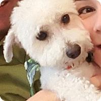 Adopt A Pet :: Skipper - Mississauga, ON